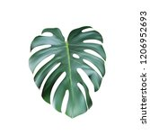 realistic tropical monstera... | Shutterstock .eps vector #1206952693
