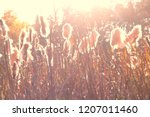Small photo of Dry reeds grass at sunset. Landscape of reeds grass background backlit natural sunlight. Autumn reeds grass background.