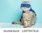 Stock photo superhero cat scottish whiskas with a blue cloak and mask the concept of a superhero super cat 1207047616