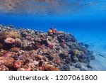 coral reef in egypt with color... | Shutterstock . vector #1207061800