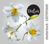 white lily flower vector design ...   Shutterstock .eps vector #1207093660