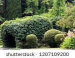an arch entwined with ivy in... | Shutterstock . vector #1207109200
