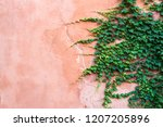 background with a plan of ivy... | Shutterstock . vector #1207205896