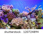 Tropical Sea Underwater With...