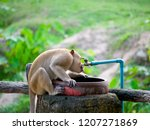 the monkeys are trying to take...   Shutterstock . vector #1207271869