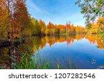 autumn deciduous forest in... | Shutterstock . vector #1207282546