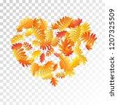 oak  maple  wild ash rowan... | Shutterstock .eps vector #1207325509