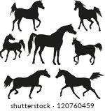 arabian horses   Shutterstock .eps vector #120760459