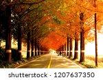 bikes and people on metasequoia ... | Shutterstock . vector #1207637350
