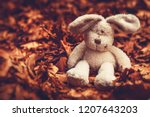 Stock photo closeup photo of a little sad plush rabbit sitting on the ground covered with old dry tree leaves 1207643203