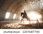 majestic image of horse horse...   Shutterstock . vector #1207687750