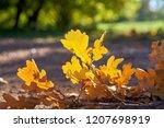 fallen oak leaves on a footpath ...   Shutterstock . vector #1207698919