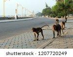 many monkeys are walking on...   Shutterstock . vector #1207720249