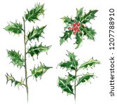 holly. christmas tree. sketch... | Shutterstock . vector #1207788910
