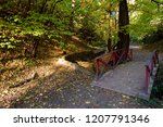 amazing nature and fall concept.... | Shutterstock . vector #1207791346