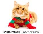 funny cat  cute cat dressed in... | Shutterstock . vector #1207791349