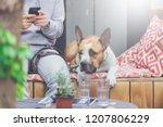 dog and his owner sitting on... | Shutterstock . vector #1207806229