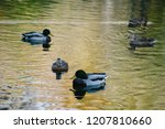 Ducks On A Lake. Beautiful...