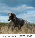 andalusian stallion in autumn... | Shutterstock . vector #1207811143
