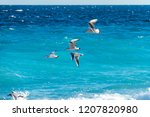 flying seagulls over the surf... | Shutterstock . vector #1207820980