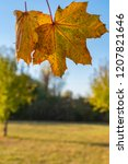 colorful autumn leaves of a... | Shutterstock . vector #1207821646