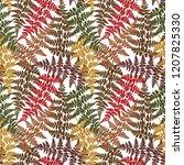 fern frond herbs  tropical... | Shutterstock .eps vector #1207825330