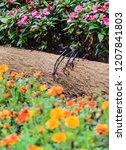 small female chestnut sided... | Shutterstock . vector #1207841803