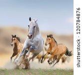 Wild Horses In Desert