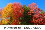 colorful long tree branches of... | Shutterstock . vector #1207873309