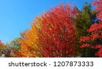 vibrant tree canopies changing... | Shutterstock . vector #1207873333
