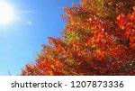 lens flare  warm autumn sun... | Shutterstock . vector #1207873336