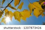 lens flare  macro  dof  bright... | Shutterstock . vector #1207873426