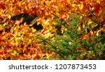 close up  dof  bright fall sun... | Shutterstock . vector #1207873453