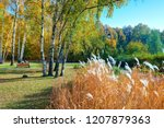 sunny day autumn forest with... | Shutterstock . vector #1207879363