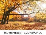 beautiful autumn landscape. old ... | Shutterstock . vector #1207893400