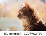 a portrait of a pure bred... | Shutterstock . vector #1207962490