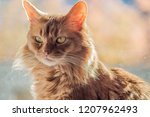 a portrait of a pure bred... | Shutterstock . vector #1207962493