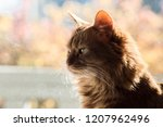 a portrait of a pure bred... | Shutterstock . vector #1207962496