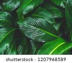 Green Leaves Pattern Backgroun...