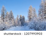 winter forest landscape  with...   Shutterstock . vector #1207993903