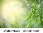 closeup nature view of green... | Shutterstock . vector #1208014336