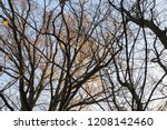 deciduous trees without foliage ... | Shutterstock . vector #1208142460