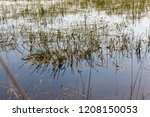 Pond With Muddy Water In Which...