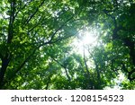 sun through the leaves | Shutterstock . vector #1208154523