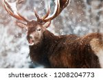 noble red deer male against the ... | Shutterstock . vector #1208204773