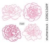 decorative peony  flowers set ... | Shutterstock .eps vector #1208212609