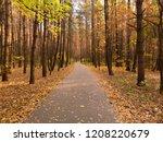 asphalt path in the autumn... | Shutterstock . vector #1208220679