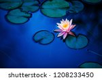 water lily  pond  park | Shutterstock . vector #1208233450