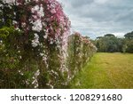 lush landscape of the south of... | Shutterstock . vector #1208291680