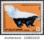 Small photo of BULGARIA - CIRCA 1985: A stamp printed in Bulgaria shows American Hog-nosed skunk, conepatus leuconotus, circa 1985